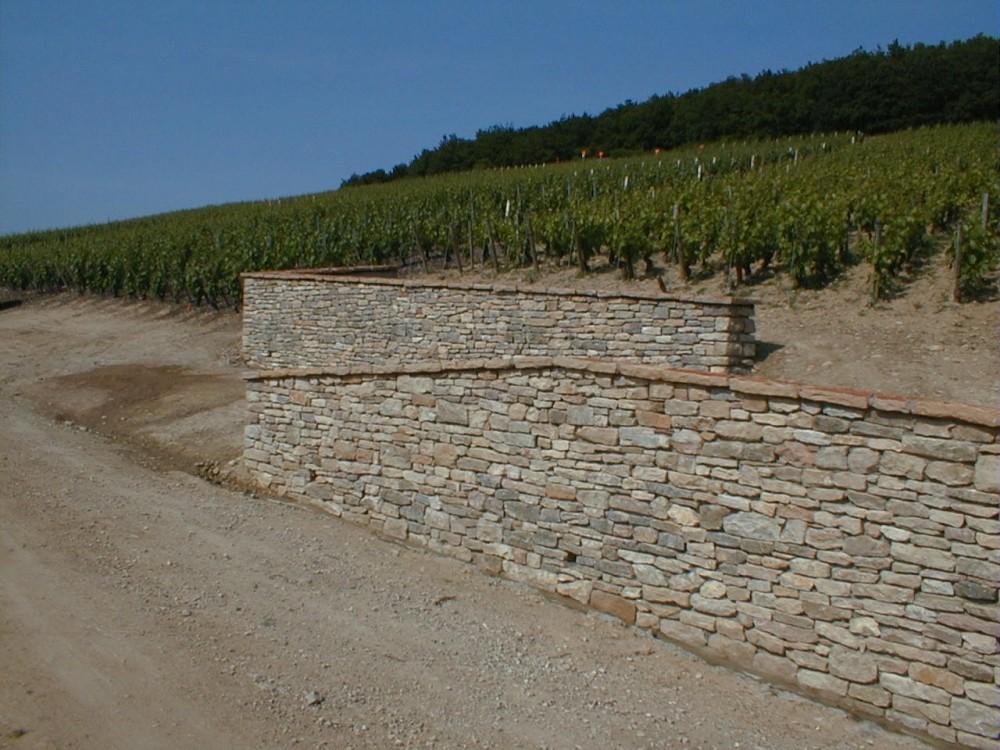 mur de vigne en CORTON CHARLEMAGNE